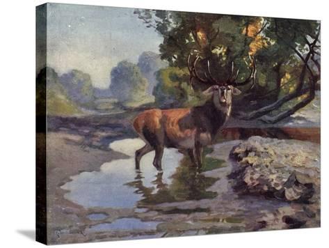 Künstler Ausgewachsener Hirsch Trinkt Am Wasser Im Wald, Bkwi--Stretched Canvas Print