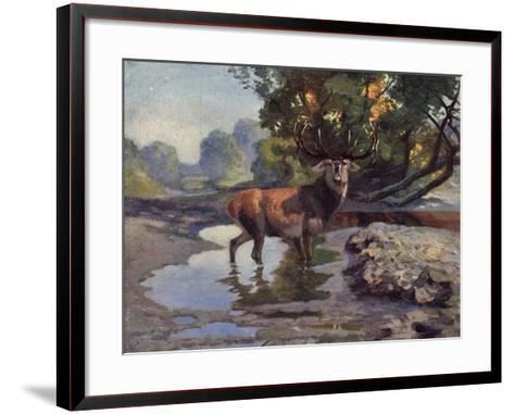 Künstler Ausgewachsener Hirsch Trinkt Am Wasser Im Wald, Bkwi--Framed Art Print