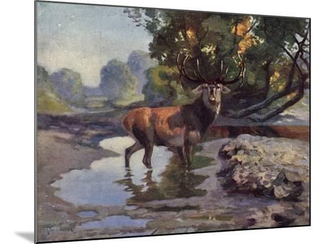 Künstler Ausgewachsener Hirsch Trinkt Am Wasser Im Wald, Bkwi--Mounted Giclee Print