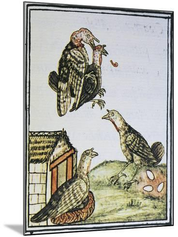 Turkeys Mating and Sitting on Eggs--Mounted Giclee Print