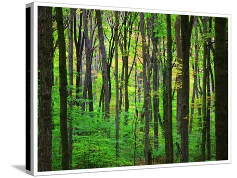 Yellowwood State Forest, Indiana, USA-Anna Miller-Stretched Canvas Print