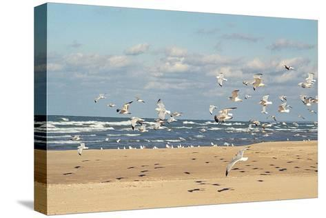 Flock of seaguls on the beaches of Lake Michigan, Indiana Dunes, Indiana, USA-Anna Miller-Stretched Canvas Print