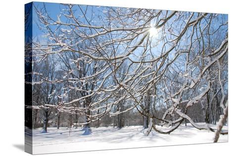 Winter in Eagle Creek Park, Indianapolis, Indiana, USA-Anna Miller-Stretched Canvas Print