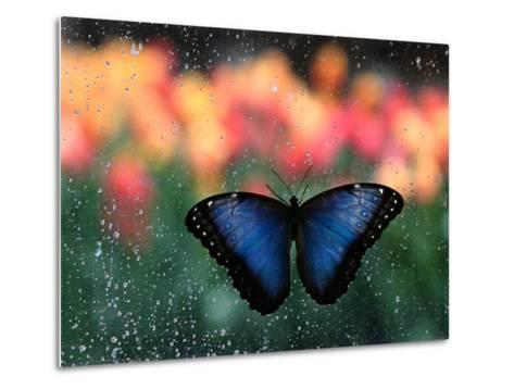 Butterfly in the White River Gardens, Indianapolis, Indiana, USA-Anna Miller-Metal Print