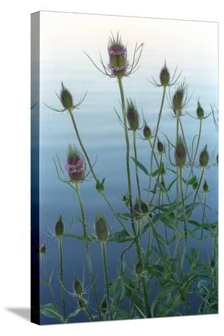 Plants on the edge of lake, Eagle Creek Park, Indianapolis, Indiana, USA-Anna Miller-Stretched Canvas Print