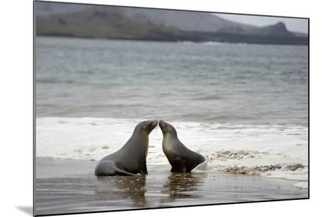 Ecuador, Galapagos Islands, Santiago Island. Galapagos Sea Lion-Kevin Oke-Mounted Photographic Print