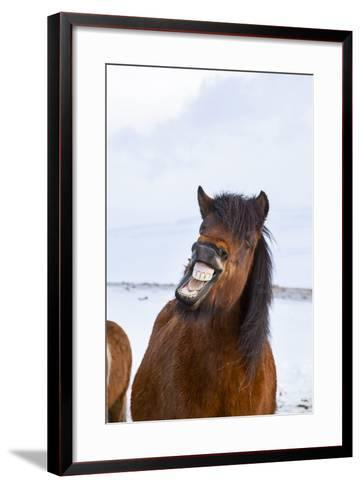 Icelandic Horse During Winter with Typical Winter Coat, Iceland-Martin Zwick-Framed Art Print