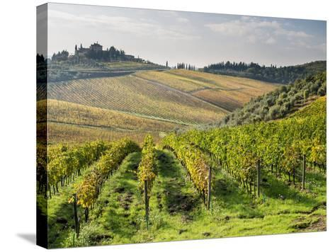 Italy, Tuscany. Rows of Vines and Olive Groves Carpet the Countryside-Julie Eggers-Stretched Canvas Print