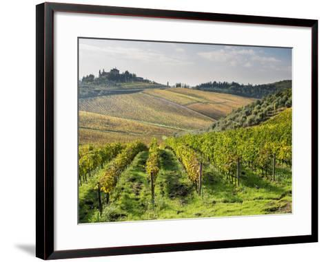 Italy, Tuscany. Rows of Vines and Olive Groves Carpet the Countryside-Julie Eggers-Framed Art Print