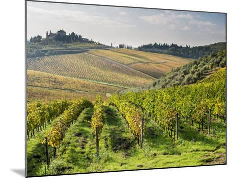 Italy, Tuscany. Rows of Vines and Olive Groves Carpet the Countryside-Julie Eggers-Mounted Photographic Print