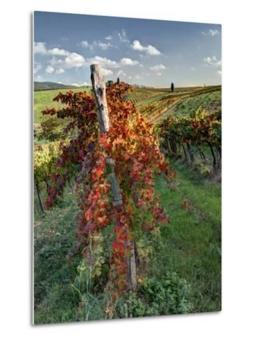 Italy, Tuscany. Vineyard in Autumn in the Chianti Region of Tuscany-Julie Eggers-Metal Print
