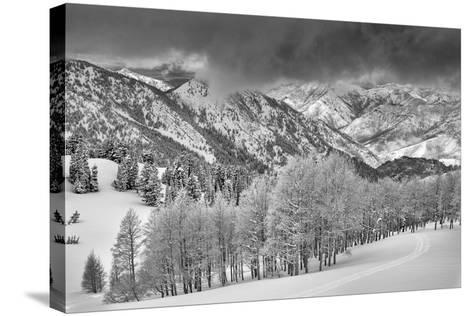 Evergreens and Aspen Trees in a Snow Storm Near Gobbler's Knob, Utah-Howie Garber-Stretched Canvas Print