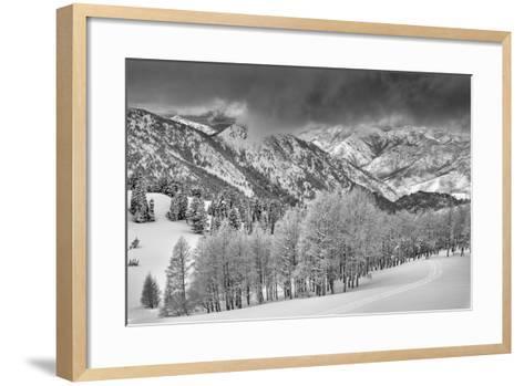 Evergreens and Aspen Trees in a Snow Storm Near Gobbler's Knob, Utah-Howie Garber-Framed Art Print