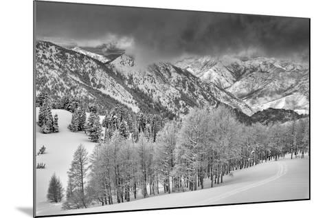 Evergreens and Aspen Trees in a Snow Storm Near Gobbler's Knob, Utah-Howie Garber-Mounted Photographic Print
