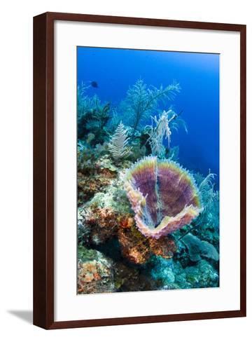 Azure Vase Sponge, Jardines De La Reina National Park Cuba, Caribbean-Pete Oxford-Framed Art Print