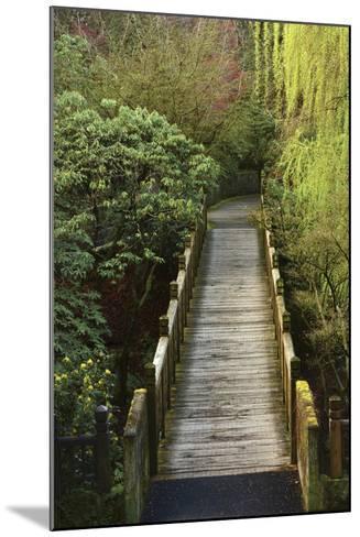 Bridge, Crystal Springs Rhododendron Garden, Portland, Oregon, Usa-Michel Hersen-Mounted Photographic Print