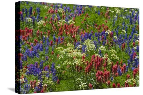 Wildflowers, Mount Timpanogos, Uintah-Wasatch-Cache Nf, Utah-Howie Garber-Stretched Canvas Print