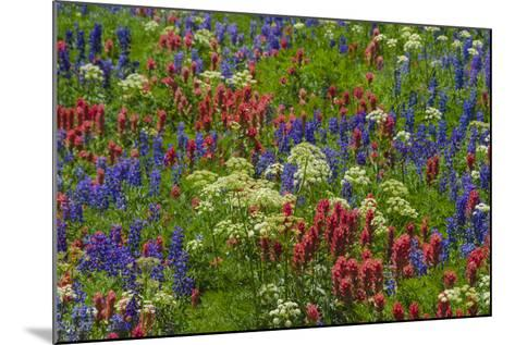 Wildflowers, Mount Timpanogos, Uintah-Wasatch-Cache Nf, Utah-Howie Garber-Mounted Photographic Print