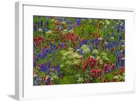 Wildflowers, Mount Timpanogos, Uintah-Wasatch-Cache Nf, Utah-Howie Garber-Framed Art Print