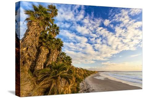 The Golden California Coastline at Swami's Beach in Encinitas, Ca-Andrew Shoemaker-Stretched Canvas Print