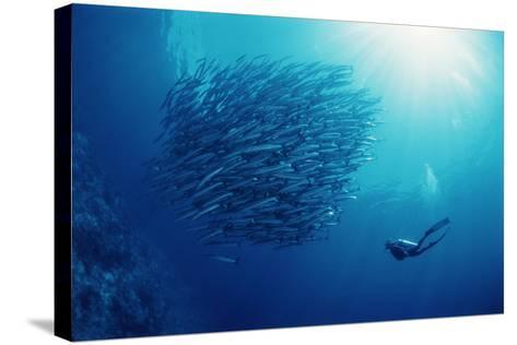 Indonesia, Scuba Diving in Sea-Michele Westmorland-Stretched Canvas Print