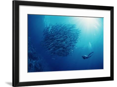 Indonesia, Scuba Diving in Sea-Michele Westmorland-Framed Art Print