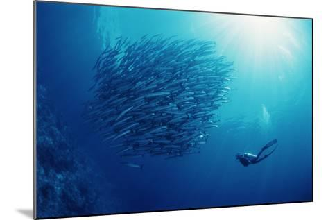 Indonesia, Scuba Diving in Sea-Michele Westmorland-Mounted Photographic Print