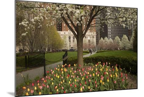 Trees and Tulips in Blloom in Mellon Green, Pittsburgh, Pa-Dave Bartruff-Mounted Photographic Print