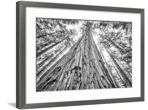 Roosevelt Grove, Humboldt Redwoods State Park, California-Rob Sheppard-Framed Art Print