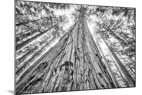 Roosevelt Grove, Humboldt Redwoods State Park, California-Rob Sheppard-Mounted Photographic Print
