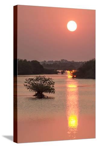 Sunrise, Mangroves and Water, Merritt Island Nwr, Florida-Rob Sheppard-Stretched Canvas Print