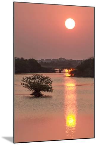Sunrise, Mangroves and Water, Merritt Island Nwr, Florida-Rob Sheppard-Mounted Photographic Print