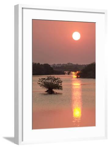 Sunrise, Mangroves and Water, Merritt Island Nwr, Florida-Rob Sheppard-Framed Art Print