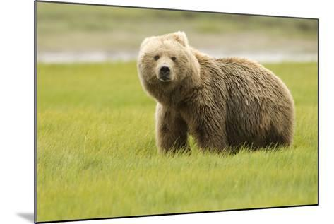 Alaskan, Brown Bear, Ursus Middendorffi, Katmai National Park, Alaska-Howie Garber-Mounted Photographic Print