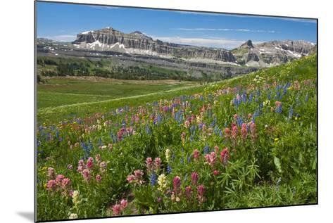 Alaska Basin Wildflower Meadow, Caribou -Targhee Nf, WYoming-Howie Garber-Mounted Photographic Print