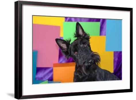Scottish Terrier Portrait in Colors-Zandria Muench Beraldo-Framed Art Print