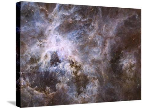 Widefield View of the Tarantula Nebula--Stretched Canvas Print