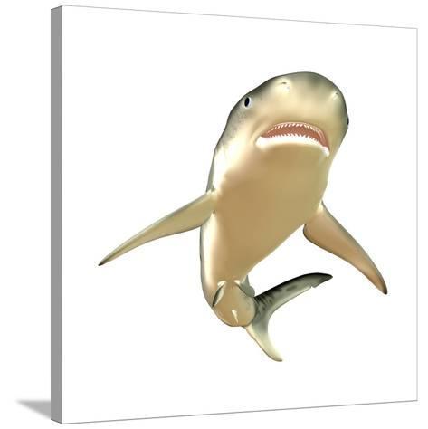 Tiger Shark--Stretched Canvas Print