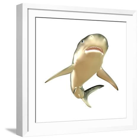 Tiger Shark--Framed Art Print