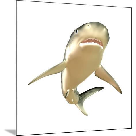 Tiger Shark--Mounted Art Print