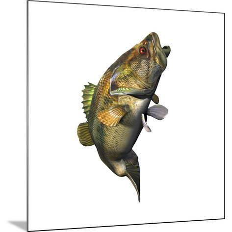 Largemouth Bass--Mounted Art Print