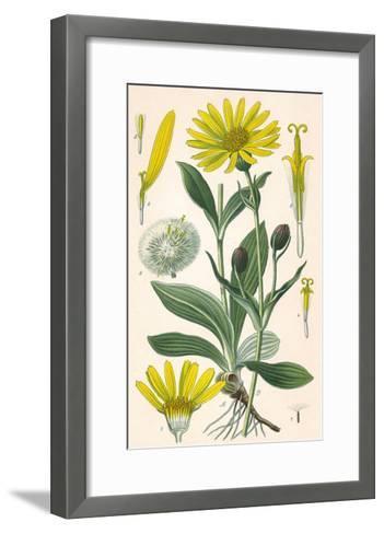 Plants, Arnica Montana--Framed Art Print