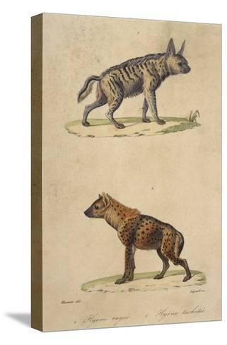 Striped and Spotted Hyena--Stretched Canvas Print