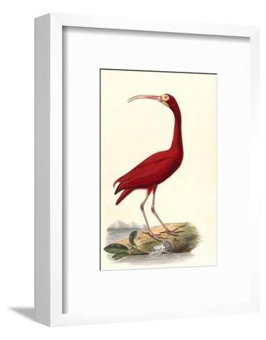 Red Ibis--Framed Art Print