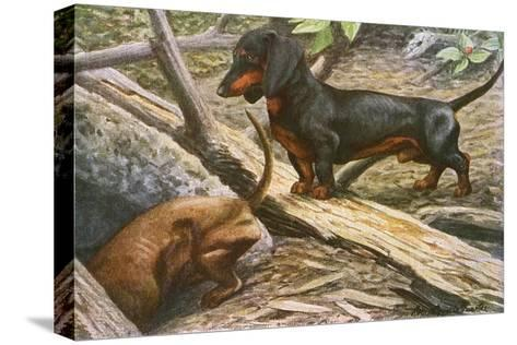 Two Dachshunds--Stretched Canvas Print