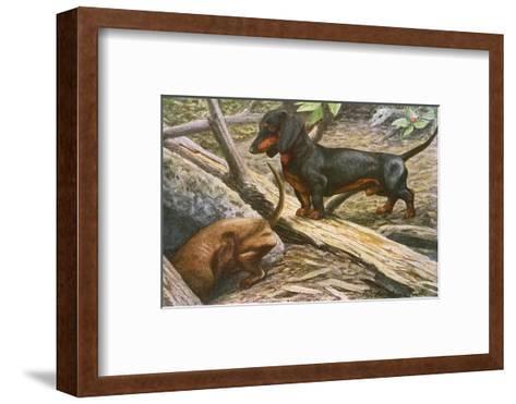 Two Dachshunds--Framed Art Print