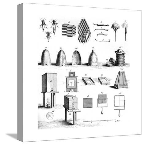 Diderot Hives--Stretched Canvas Print