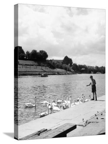 Feeding the Swans--Stretched Canvas Print