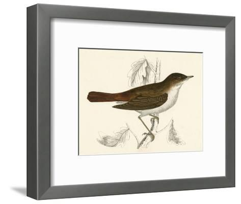Nightingale, Morris--Framed Art Print