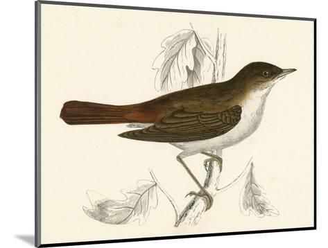 Nightingale, Morris--Mounted Giclee Print